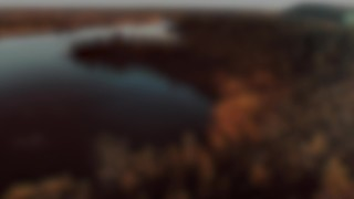 Soar Forest Blur