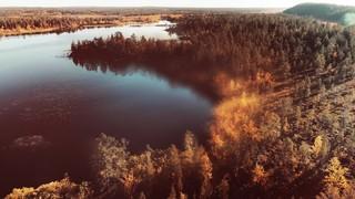 Soar Forest