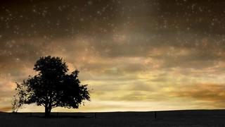 Starry Horizon