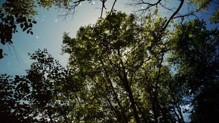 Sun Shade Canopy