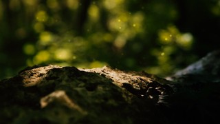 Sun Shade Rock