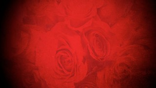 Texture Roses