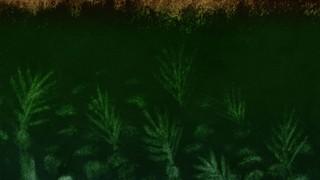 Textured Palms