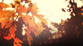 Thanksgiving Light Gold