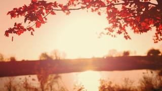 Thanksgiving Light Lake