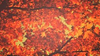 Thanksgiving Light Leaves