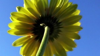 Underneath Flower