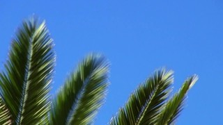 Waving Palm Branches