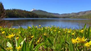 Yellow Flowers Lake