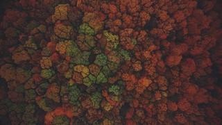 Autumn Colors Above