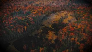 Autumn Colors Burst