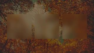 Autumn Colors Canopy Alt