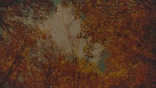 Autumn Colors Canopy