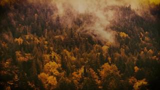 Autumn Colors Misty