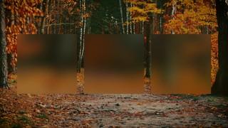 Autumn Colors Path Alt