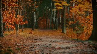 Autumn Colors Path
